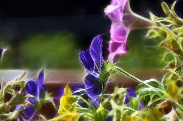 Malá záhrada, veľké nápady
