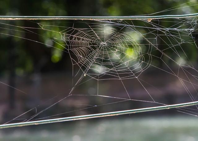 Prírodné riešenia, ktorými sa zbavíte pavúkov vo vašej domácnosti
